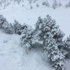 The trees were covered in white in Arinsal