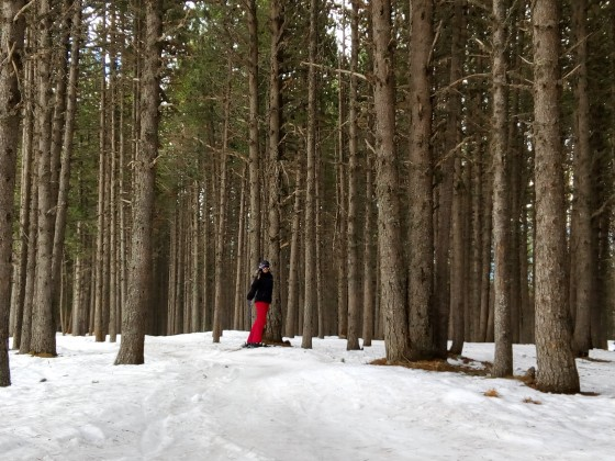 Can you find the skier in the forest of Pal?