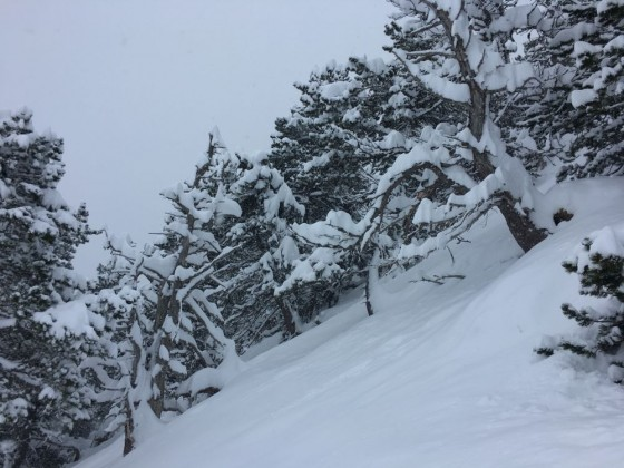 White trees on the off-piste of Arinsal