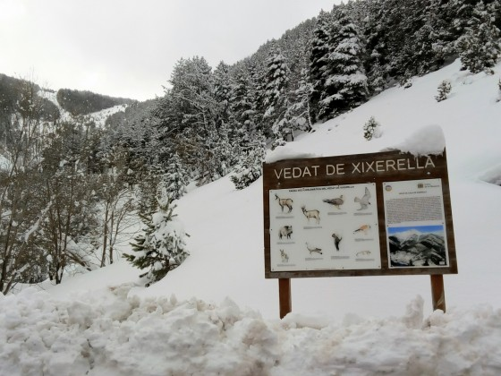Powder day on the slopes of Arinsal