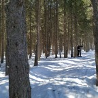 Skiing among the forests of Pal