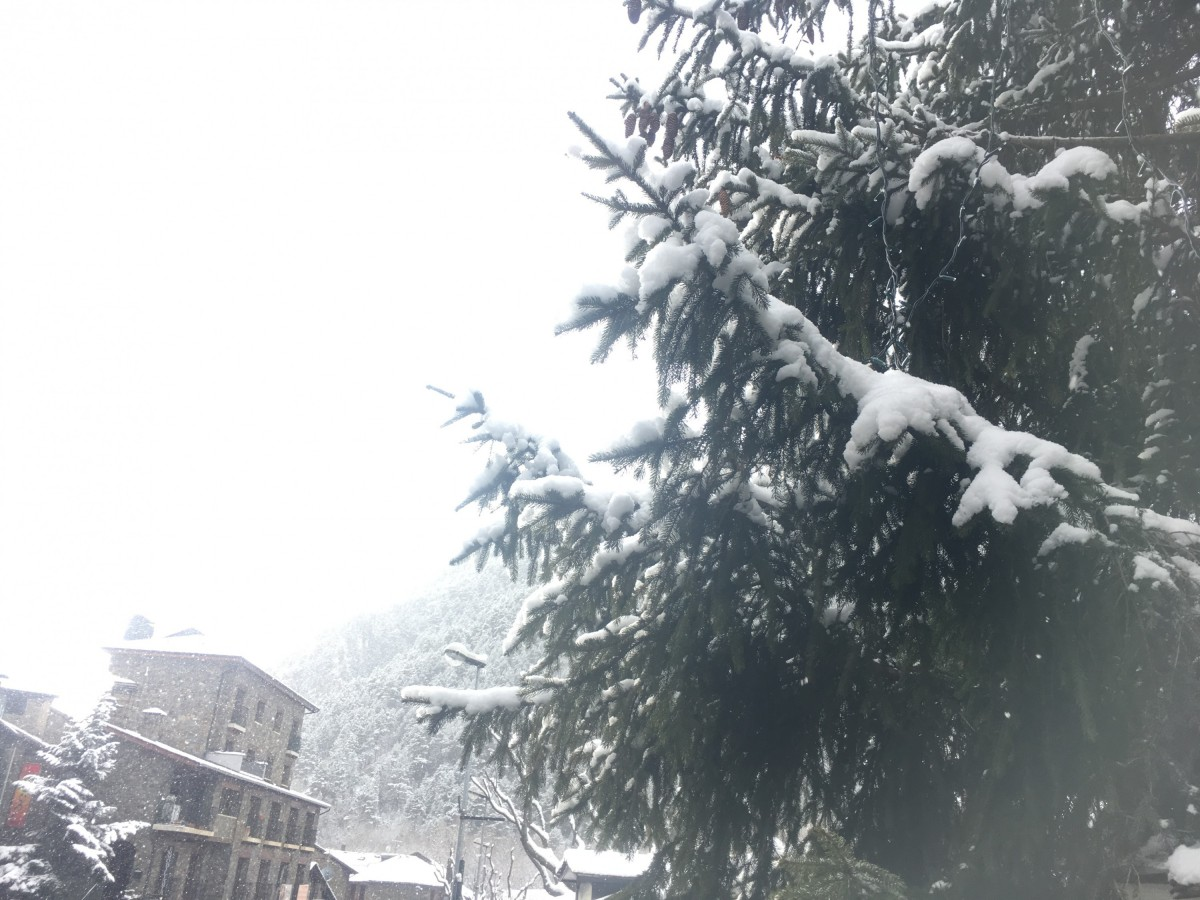 Trees covered by snow in Arinsal