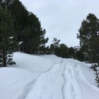 The off-piste around the forest of Pal it was full of powder snow today