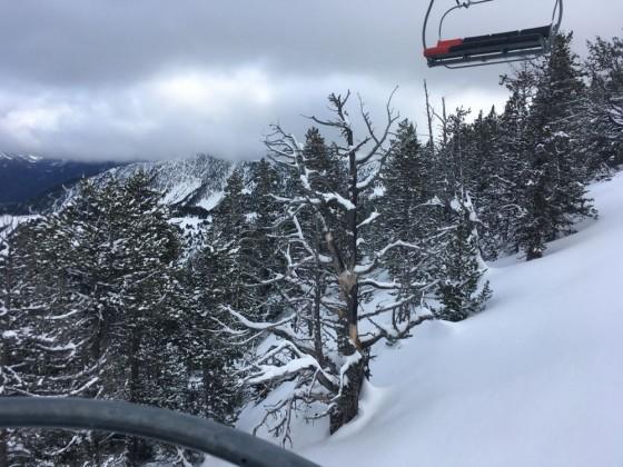 Fresh snowfall on the trees