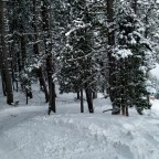 The trees next to El Beç blue run were so much fun