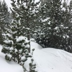 The off-piste next to El Beç is already covered by snow