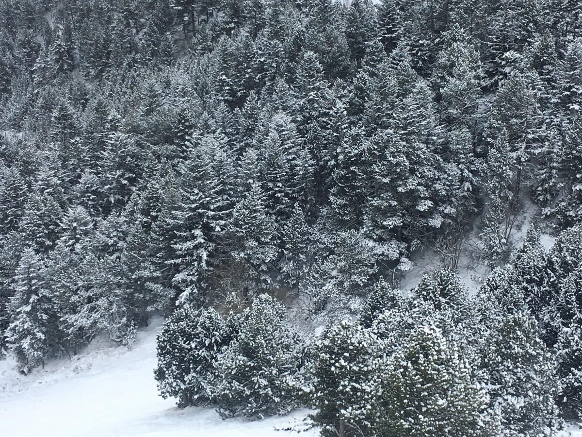Stunning view of the forests of Arinsal