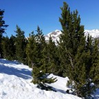 The off-piste trees in Pal in Andorra