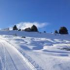 Trees and powder snow next to the draglift La Serra