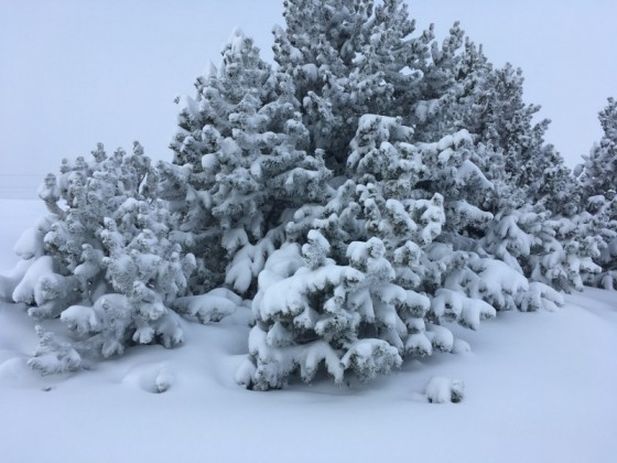 The trees were totally covered by snow