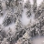 We love seeing the trees covered in white