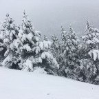 The trees looked beautiful under the snow