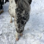 Lovely horse on the snow