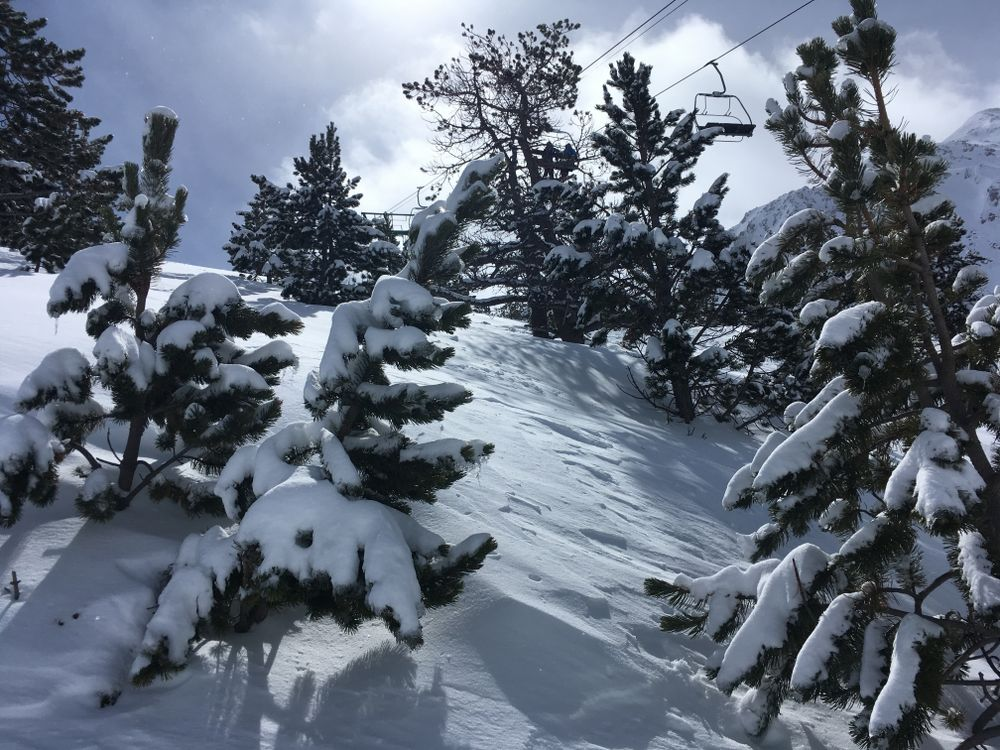 The trees of Arcalis were coverng by fresh snow