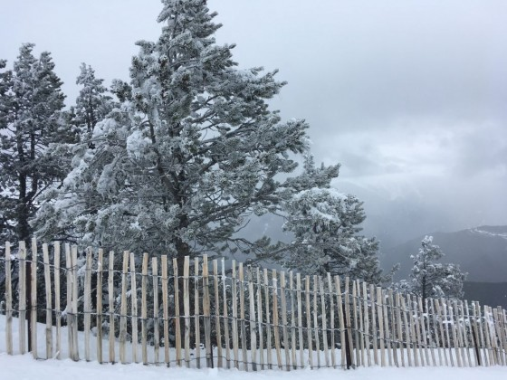 Frozen trees on the slopes of Pal today