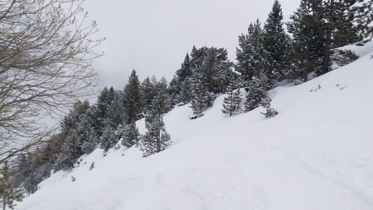 The off-piste among the trees of Arinsal was great today